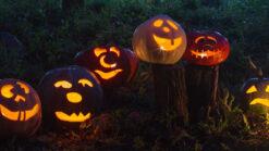 Row of Halloween jack-o-lanterns at night