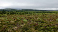 Peat bog in Edinburgh