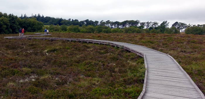 Footpath through Red Moss Nature Reserve