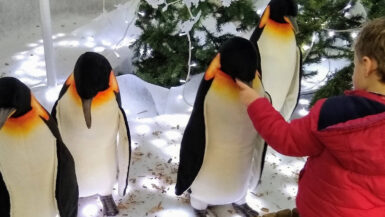 Boy looking a models of penguins in a santa's grotto